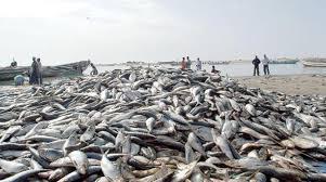 ثلاثة أساطيل تستنزف الشواطئ الموريتانية